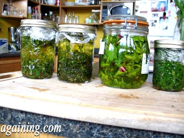 Фото - May 26 - herbal oil & vinegars (3)