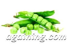 Фото: Консервування зеленого горошку