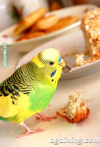 Фото: Персиковий пиріг фото